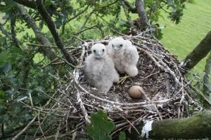 Hobby nest